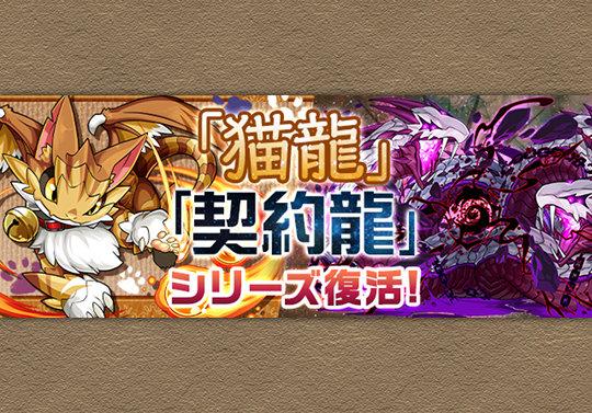 7月25日から9月4日まで週替りで猫龍と契約龍が登場!