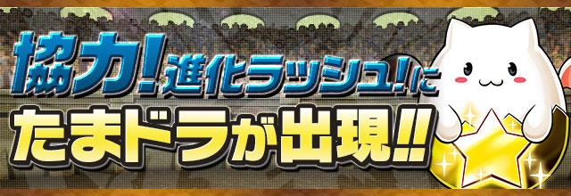「協力!進化ラッシュ!」にたまドラが出現!!